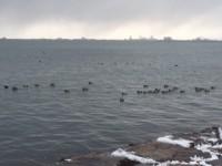 今日のびわ湖